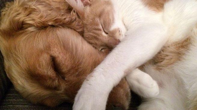 Hogar: Cómo quitar el olor de mascotas de tu casa