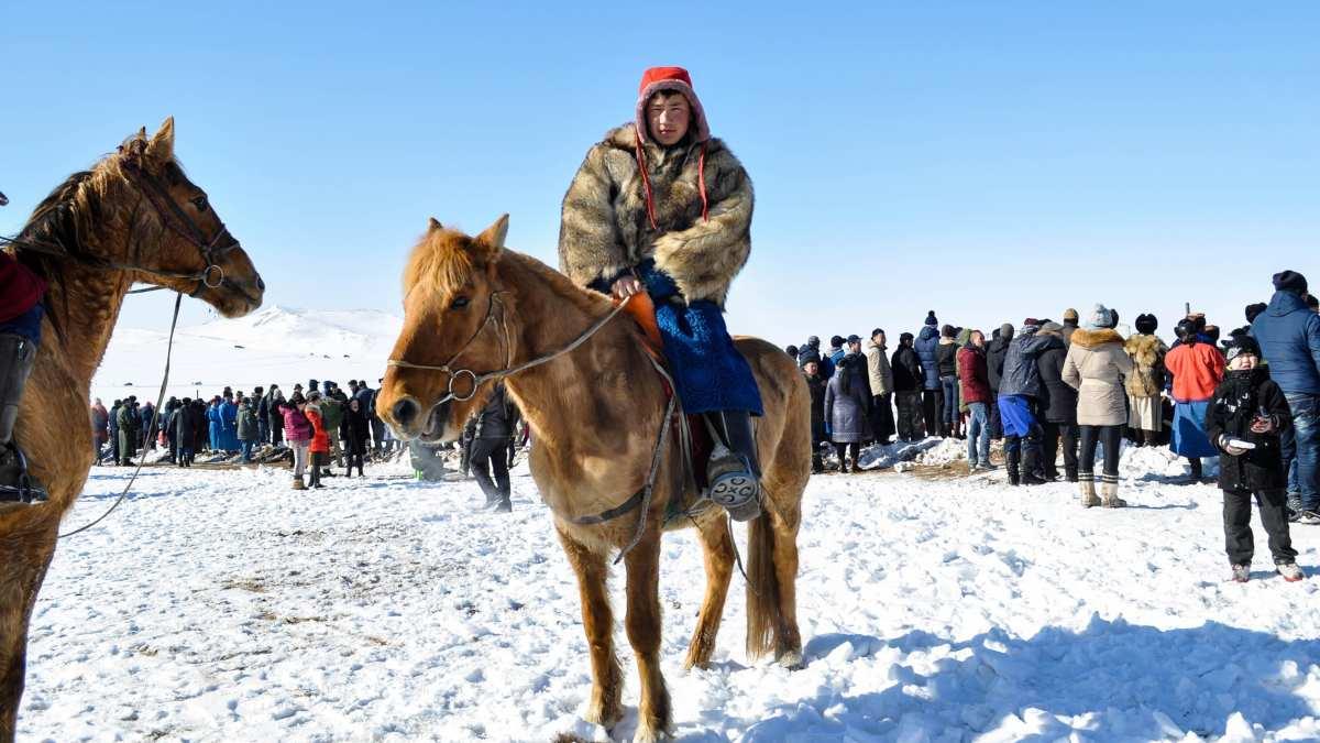 Equinos: el caballo mongol