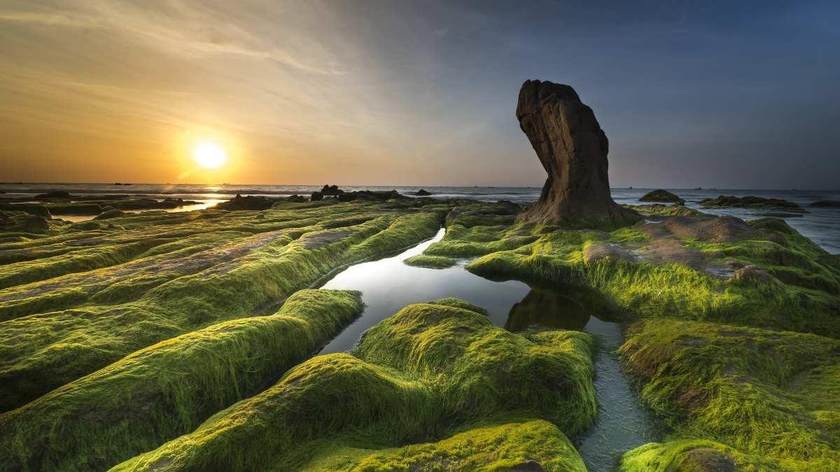 Las algas y la energía