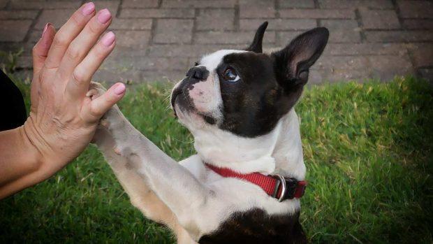 Mano a mano con perro