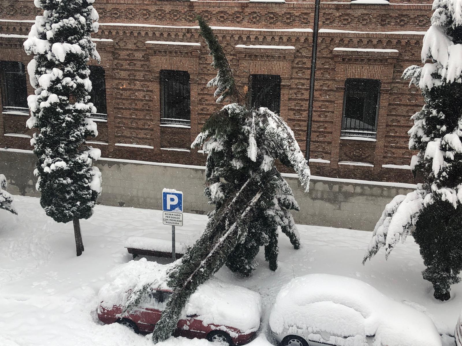 Un árbol caído en Leganés.