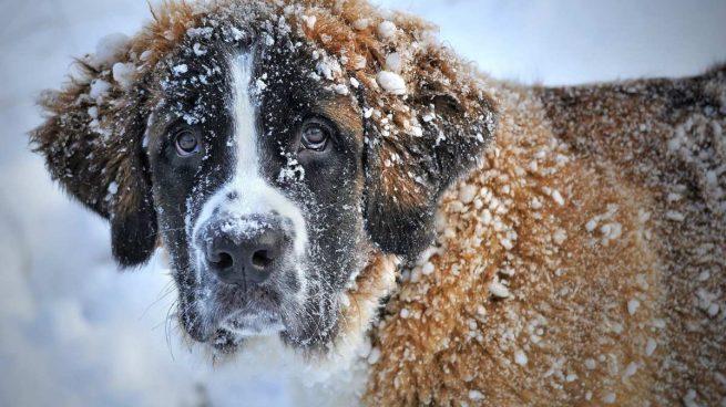 Perro con nieve