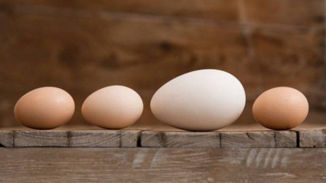 tamaño huevos