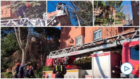 Bomberos de la Comunidad de Madrid actuando sobre árboles dañados por Filomena