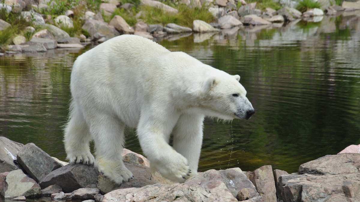 Fauna norte del mundo