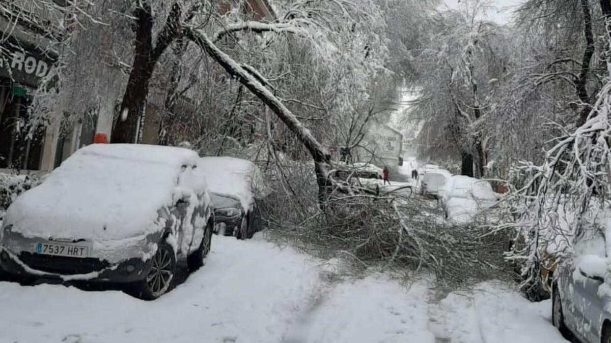 Árboles caídos por Filomena. (Europa Press)