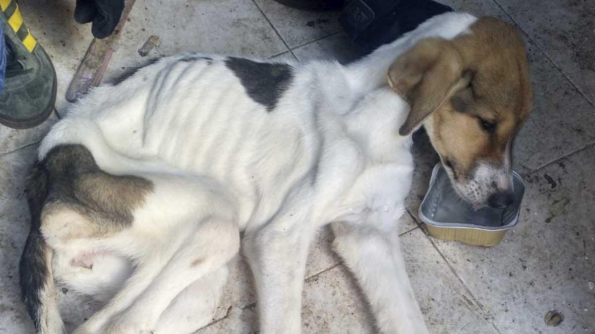 Imagen de uno de los perros rescatados. Foto: Europa Press
