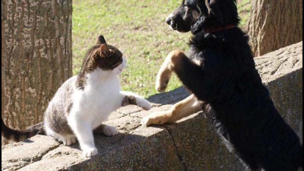 Gato juega con perro