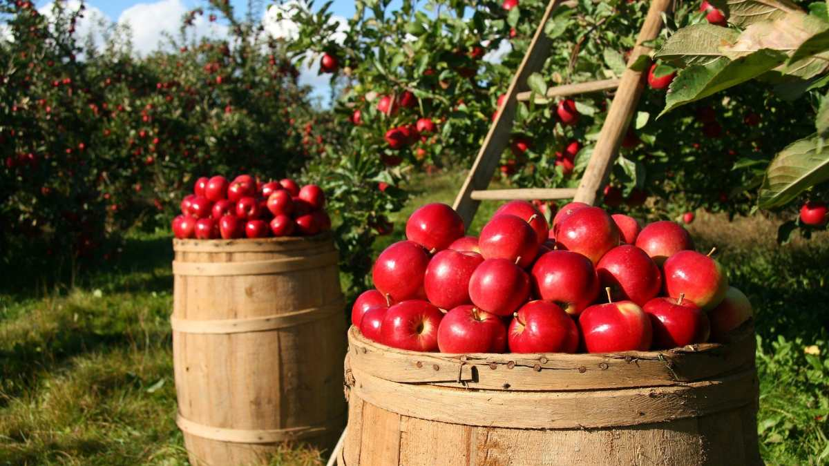 Tierra agrícola ecológica