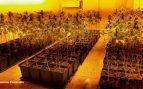 Albiol desvela que los cortes de luz en un bloque de Badalona se deben a cuatro plantaciones de maría