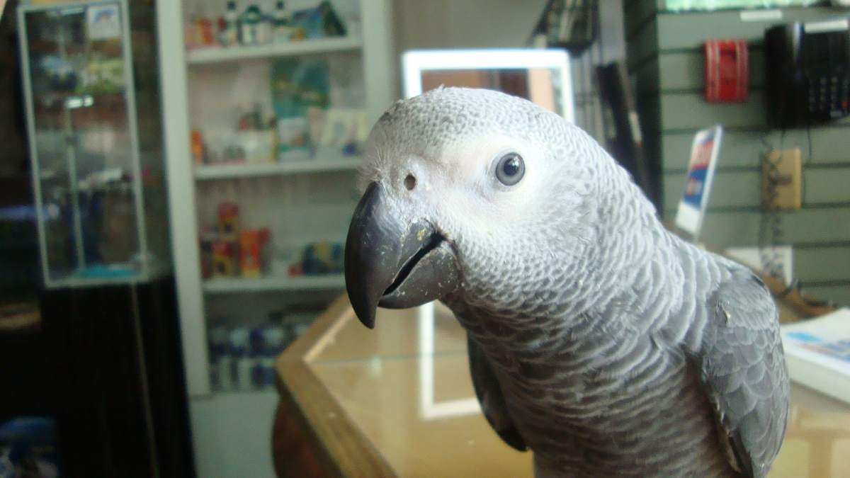 Aves más inteligentes