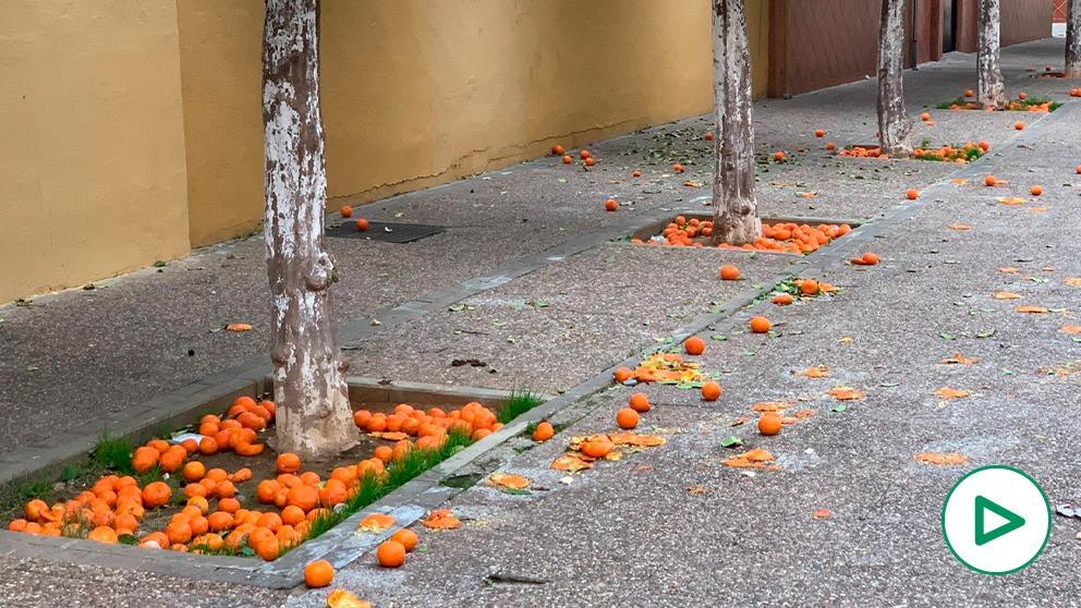 El socialista Espadas convierte Sevilla en un estercolero de naranjas.