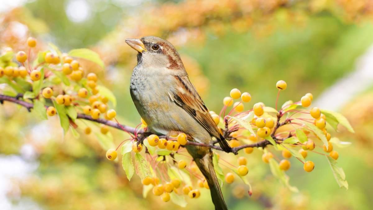 Aves en España