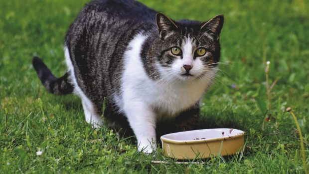 Gato con comida