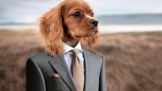 Look de perro