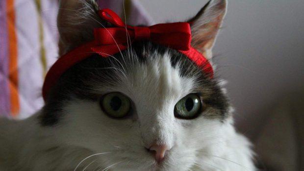 Look gato