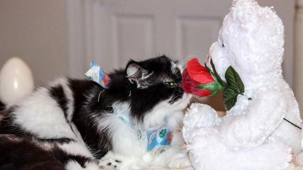 Gato oliendo
