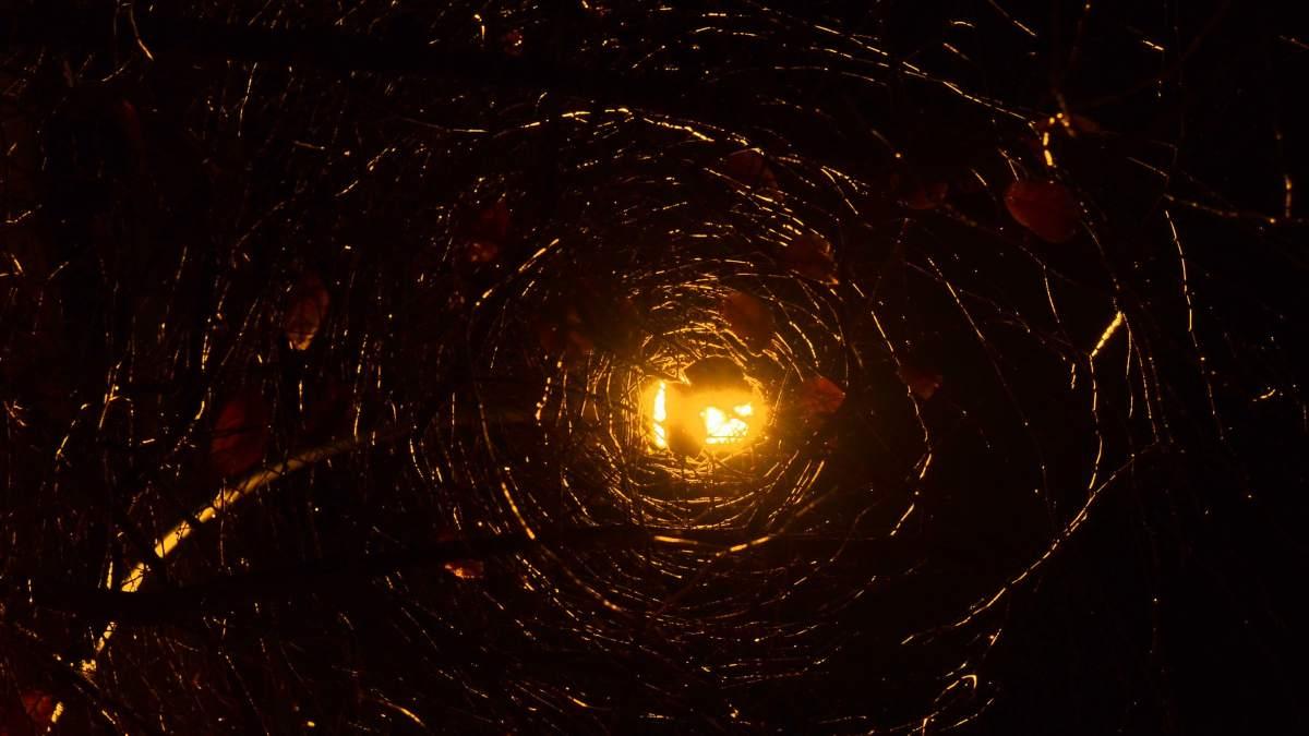 Telaraña en el cosmos