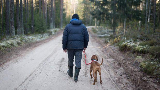 Pasear con perro