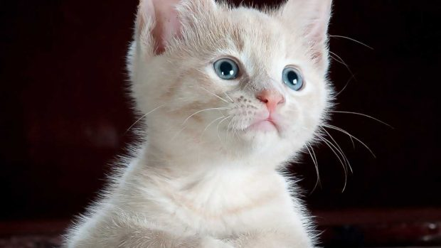 Clicker gato