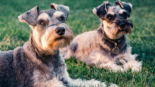Dieta y longevidad en perros