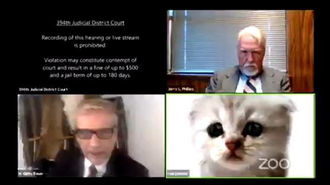 """Un abogado no puede desactivar un filtro de Zoom: """"No soy un gato"""""""