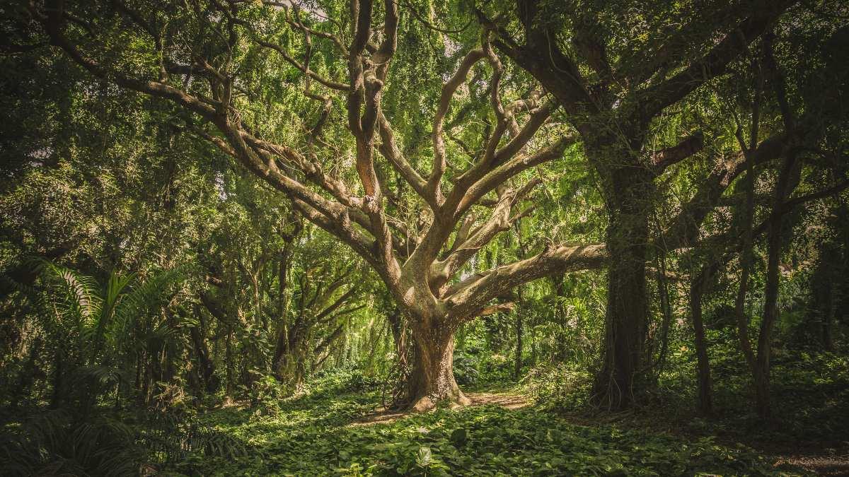 Árboles en España