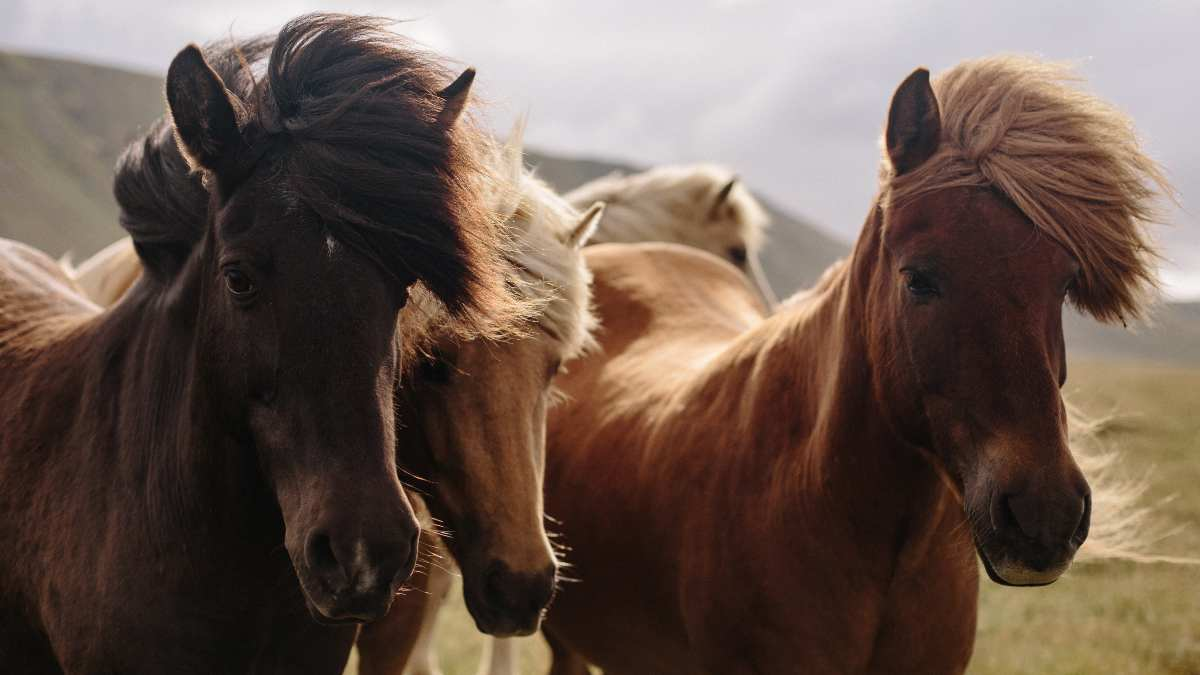 Usos de la glucosamina en caballos