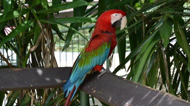 Aves exóticas