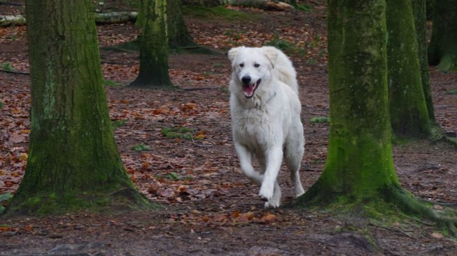 Perro sin correa