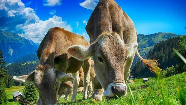 Aminoácidos animales