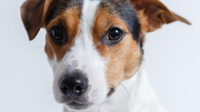 ¿Cómo saber si tu perro es superdotado? El experimento para hacer en casa