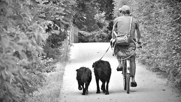 Ciclismo con perro