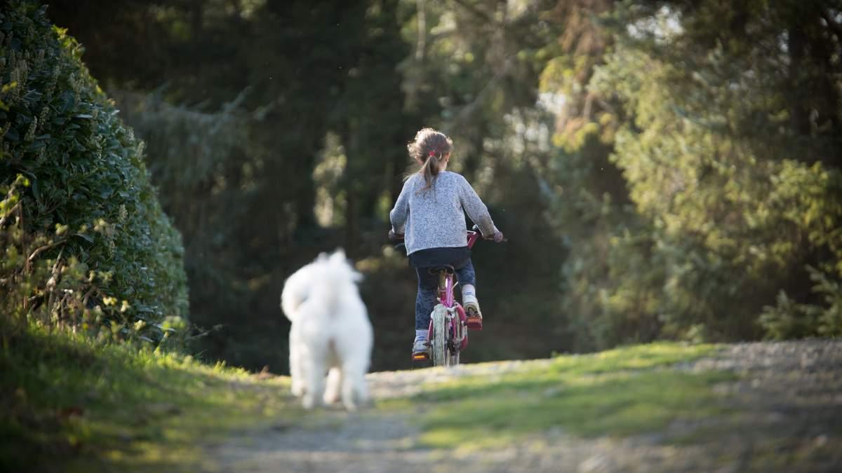 Hacer ciclismo o bikejoring con un perro
