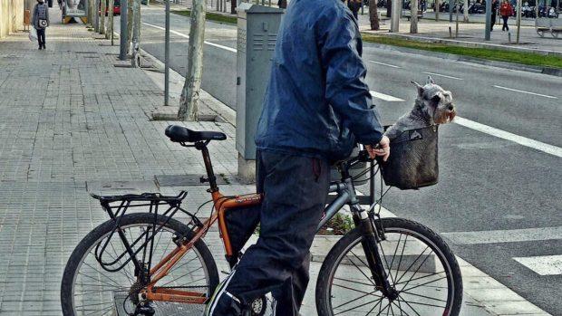 Perro en cesta
