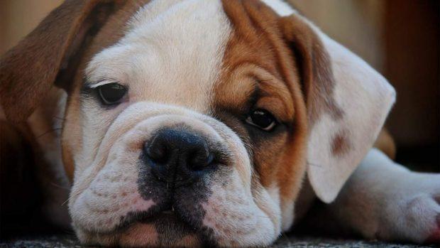 Bronquitis con mascotas