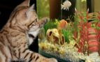 Estrés en peces