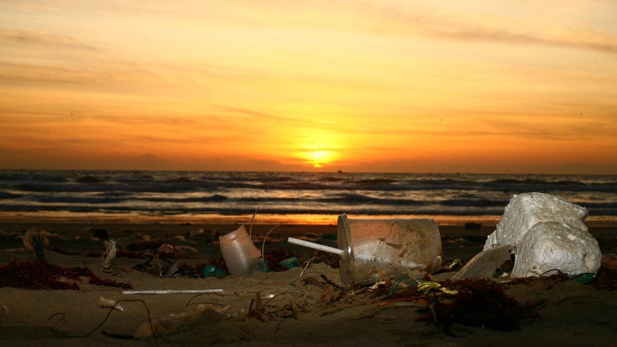 Peces de consumo y plásticos