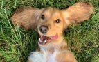 ¿Tu perro tiene hipo? Esto es lo que puedes hacer