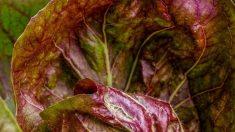 Descubre algunas verduras que comer en primavera