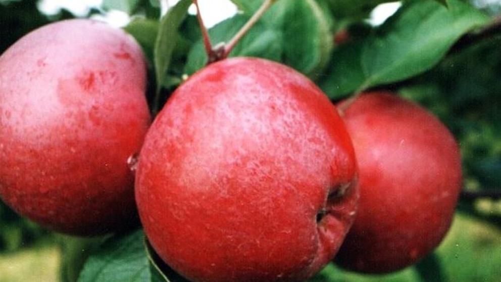 ¿Cuáles son las mejores frutas para comer en marzo?