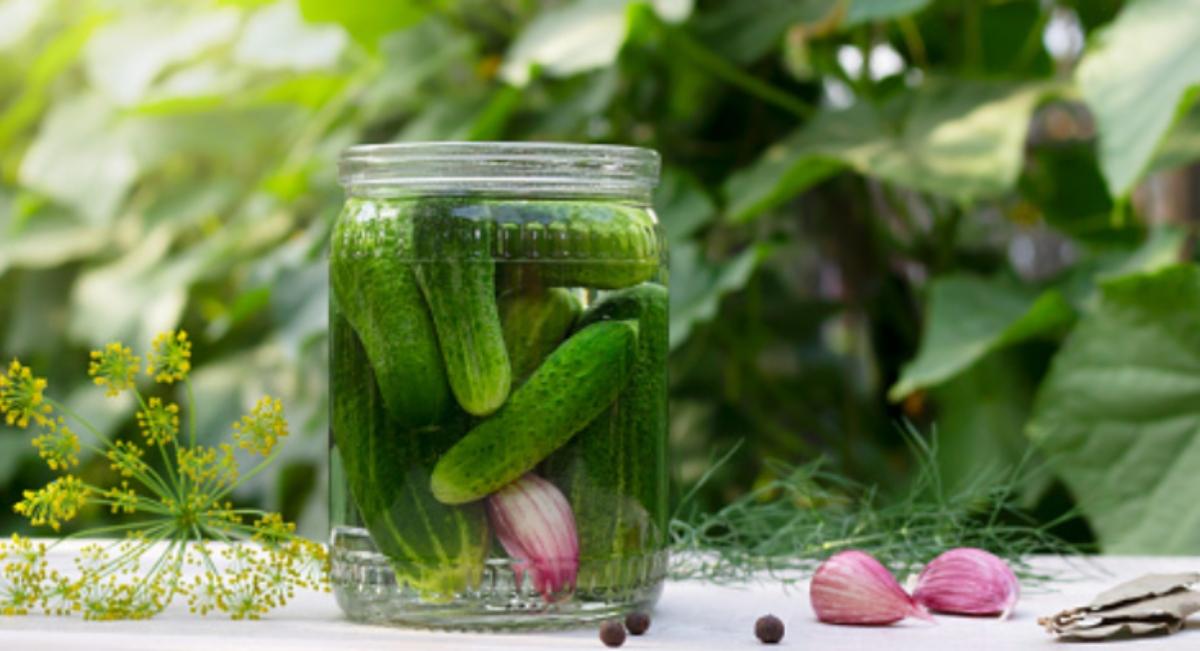 Cómo cultivar pepinos en casa en una maceta