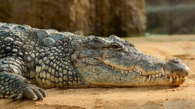 Sacan el cuerpo de un niño de ocho años del estómago de un cocodrilo