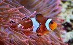 Estos son los mejores peces para un acuario pequeño
