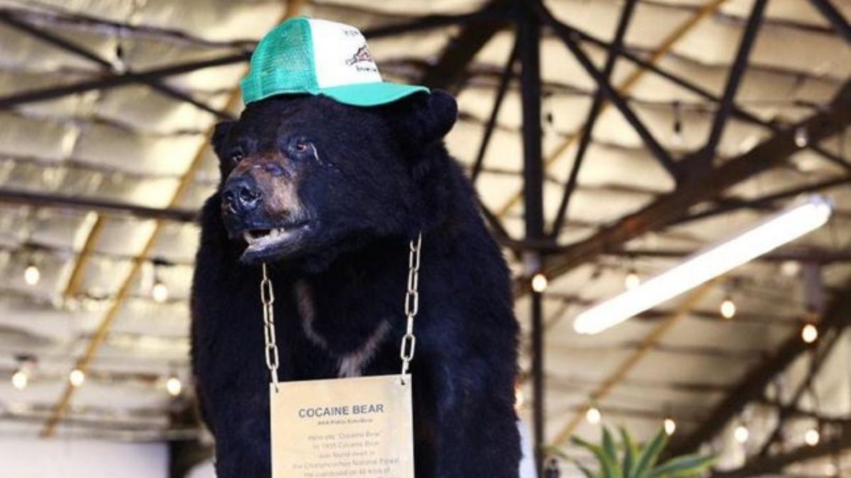 Homenajean al oso que consumió por accidente 30 kg de cocaína