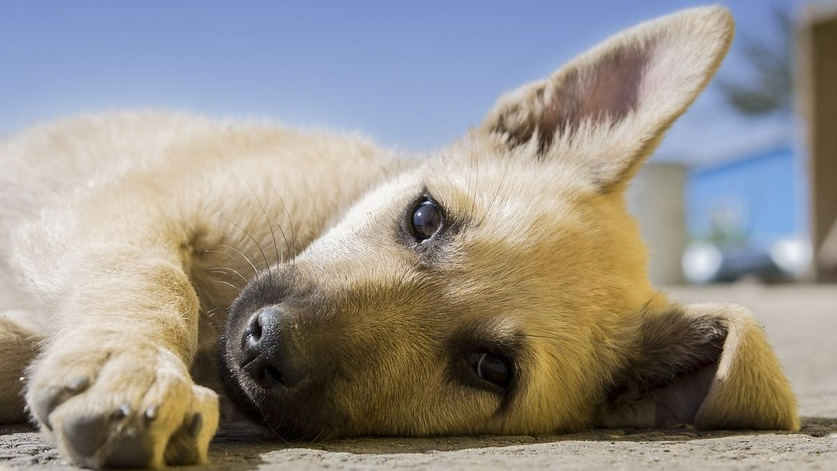 Perro durmiendo de lado
