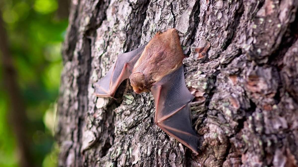 Un científico habla sobre más tipos de coronavirus en murciélagos en China actualmente