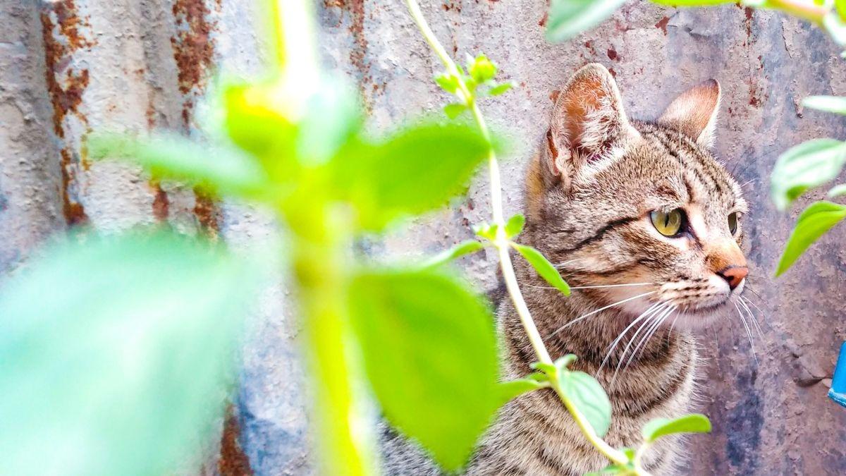 Gato en el balcón