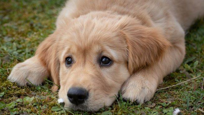 7 plantas que son tóxicas para los perros