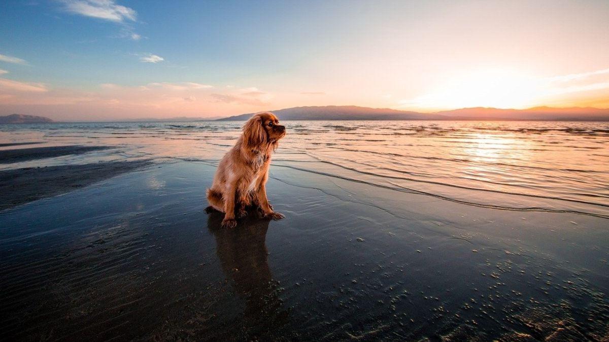 Descubre las mejores playas para perros en el Mediterráneo